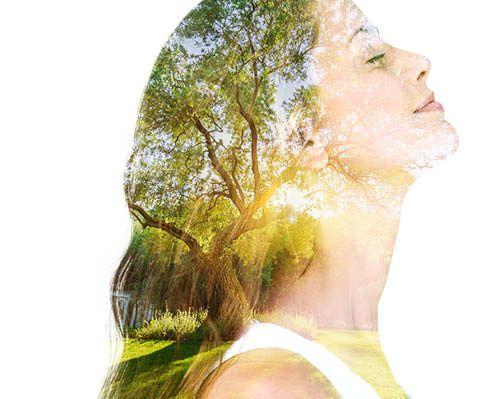 Wissen der Mazeration als Verfahren der Phytotherapie anwenden